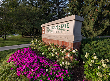 MSU sign surrounded by pink vinca and white hydrangeas